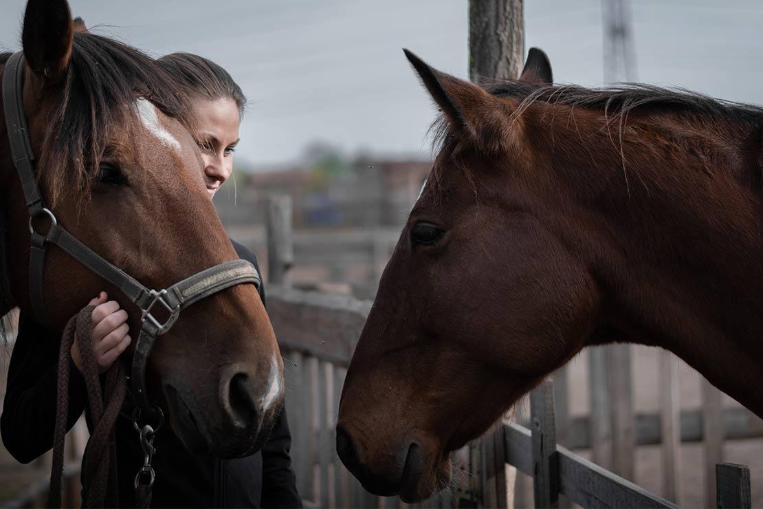 seminiare-equestre-positiveevents