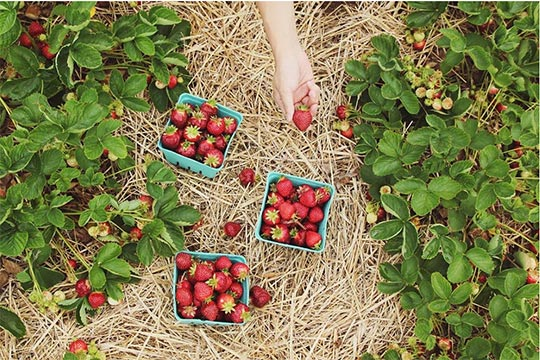 gally-fraises-positive-events-1